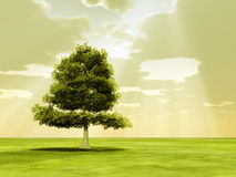 Tree in the god rays Stock Photography
