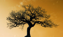 Tree with gold background Royalty Free Stock Photos