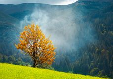 Tree with golden foliage on grassy hillside. In smoke. beautiful autumn scenery in mountains royalty free stock photography