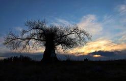 Tree  golden Hour germany sunset strom romantic blue. Tree  germany sunset strom romantic Stock Photo