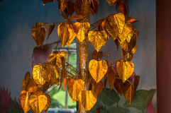 Tree with golden leaves Royalty Free Stock Photo