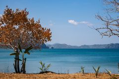 Tree with golden leaves with small palms against scenic seascape. Tropical landscape in autumn. Trees on Philippines beach. Tree with golden leaves with small royalty free stock photos