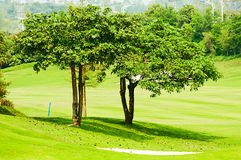 The  tree  in  the  Golf course Stock Images