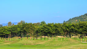 Tree in golf course Royalty Free Stock Images