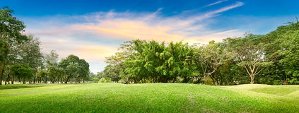 Tree in golf course Stock Photos