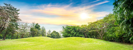 Tree in golf course Stock Images