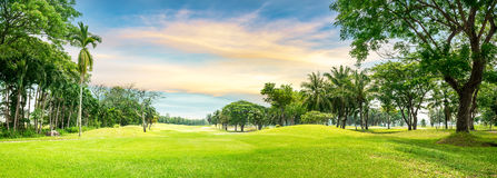 Tree in golf course Stock Photography