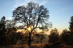 Tree of Grace. This a photo of the sun on a lazy afternoon taken on the top of Standfield Hill, Oregon House, California Stock Photos