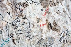 Tree and graffiti Royalty Free Stock Photo