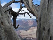 Tree Grand Canyon Arizona South Rim Stock Photos