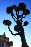 Tree. At Grand Palace Stock Photo