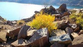 Tree on granite stock video footage