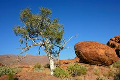 Tree and granite rocks Stock Photo