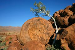 Tree and granite rocks Royalty Free Stock Photography