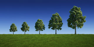 Tree graph. 3d rendering of a green field with trees getting bigger and bigger Royalty Free Stock Image