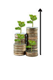 Tree and graph on money growth concept in business. Coins on white background Stock Photo