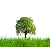 Tree and grass Stock Images