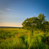Tree in grass Stock Photography