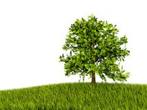 Tree on grass. Isolated on white Royalty Free Stock Photos
