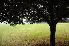 Tree and grass Royalty Free Stock Photography