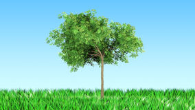 Tree on the grass. For use in presentations, manuals, design, etc Royalty Free Stock Image