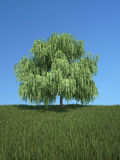 Tree with grass and blue sky Royalty Free Stock Image
