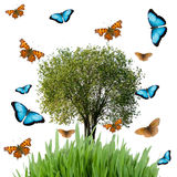 Tree,  grass and butterflies Stock Image