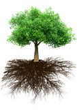 Tree and grass 3D illustration Royalty Free Stock Photos