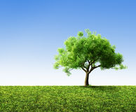 Tree with grass Royalty Free Stock Photo