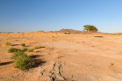 Tree and grass in the Desert, Ouzina, Morocco Stock Photos