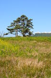 Tree in a grass field Royalty Free Stock Photo