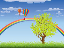 Tree on grass field. Green grass field with a tree, rainbow and hot air balloons in the sky Stock Images