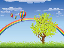Tree on grass field. Green grass field with a tree, rainbow and hot air balloons in the sky Royalty Free Stock Image