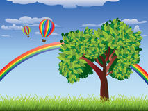 Tree on grass field. Green grass field with a tree, rainbow and hot air balloons in the sky Stock Photography