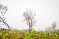 Tree in grass field with misty early Royalty Free Stock Images