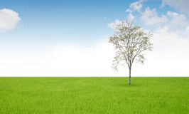 Tree and grass field Stock Photo