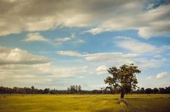 Tree grass field and sky vintage Stock Photos