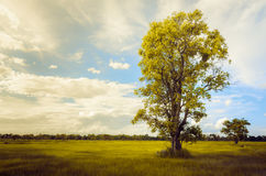 Tree grass field and sky vintage Stock Images