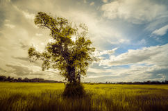 Tree grass field and sky vintage Stock Photography