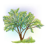 Tree and grass with flowers drawing Stock Photo