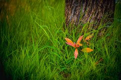 tree grass green nature royalty free stock photography