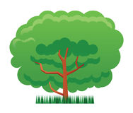 Tree and grass illustration. Vector drawing of a tree on a grass stock illustration