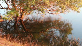 Tree and grass reflection in water. Close-up of tree and grass reflection in water in late afternoon light stock video footage