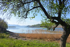 Tree and grass on the seashore. In Primary, springtime royalty free stock image