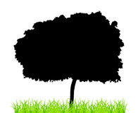 Tree And Grass Royalty Free Stock Images
