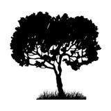 Tree and grass silhouette Stock Photos