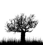 Tree and grass in silhouette are isolated on white. Illustration tree and grass in silhouette are isolated on white background - vector Stock Photos