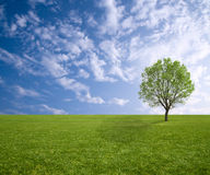 Tree and grass in spring Royalty Free Stock Images