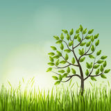 Tree with grass Royalty Free Stock Images