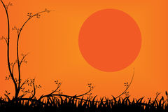 Tree and grass for sunset background Royalty Free Stock Photo